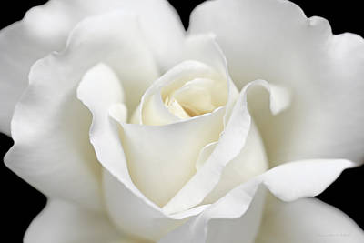Ivory Rose Photograph - Beauty Of The White Rose Flower by Jennie Marie Schell