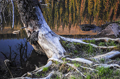 Colorado Photograph - Beaver Pond Reflection 2 by Aaron Spong
