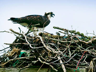 Osprey Photograph - Because I Said So by Michelle Wiarda