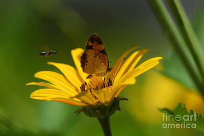 Butterfly In Motion Photograph - Bee And Butterfly by Pamela Shane