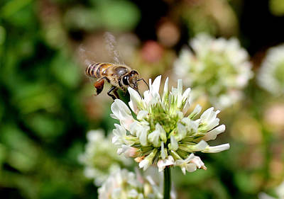 Bee And The Flower Original by Vishal Kumar