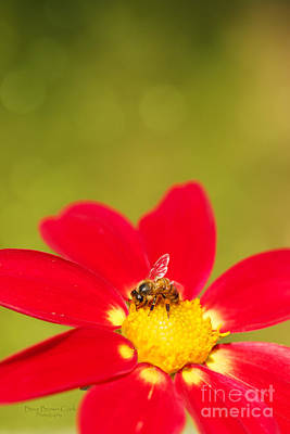 Bee-autiful Print by Beve Brown-Clark Photography