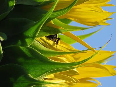 Gallery Website Photograph - Bee Happy by Dianne Cowen