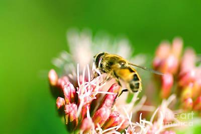 Bee On Flower Print by Michal Bednarek