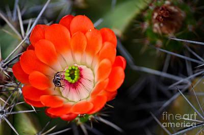 Bee Ware The Thorns Print by Deb Halloran