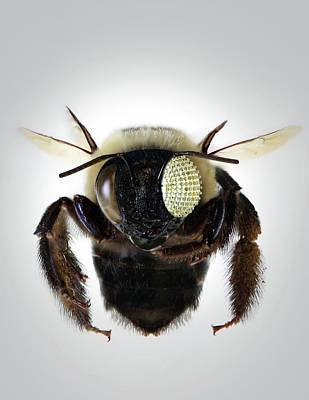 Micro Miniature Photograph - Bee With Electronic Compound Eye by Professor John Rogers, University Of Illinois