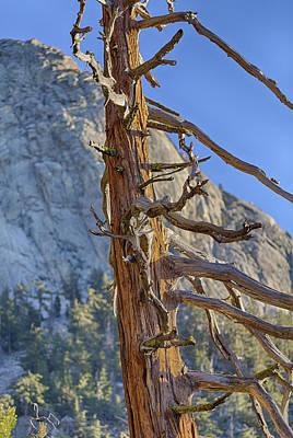 Fall Photograph - Beetle Barren Pine by Scott Campbell