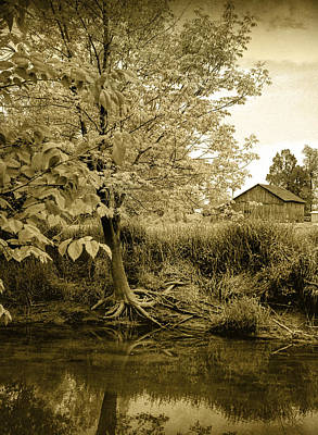 Tree Roots Photograph - Behind Ed's Barn by Randall Nyhof