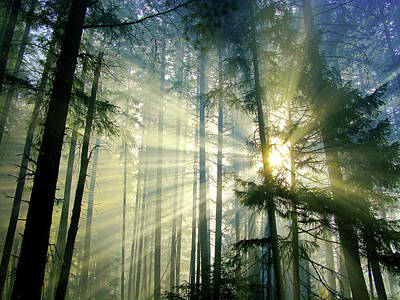 Behold The Light In The Fall Forest Print by Diane Schuster