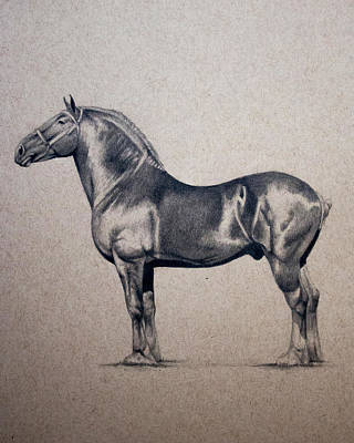 Draft Horses Drawing - Belgian Draft Horse by Lydia Smith