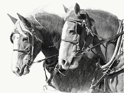 Draft Horses Drawing - Belgian Draft Mares by Bethany Caskey