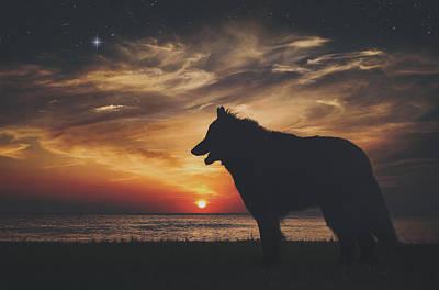 Belgian Sheepdog Photograph - Belgian Sheepdog At Sunset by Wolf Shadow  Photography