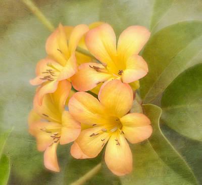 Garden Flowers Photograph - Believe by Kim Hojnacki
