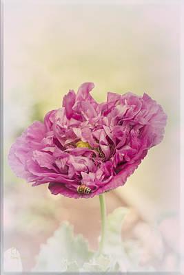 Flora Photograph - Belinda by Elaine Teague