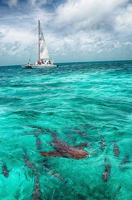 Best Sailing Photograph - Belize Turquoise Shark N Sail  by Kristina Deane