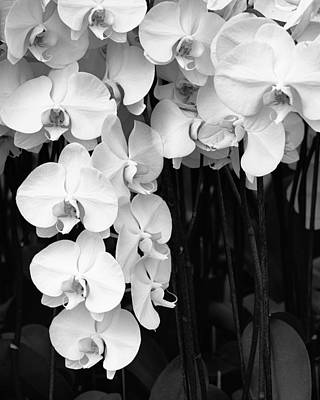 Bell Orchids Palm Springs Print by William Dey