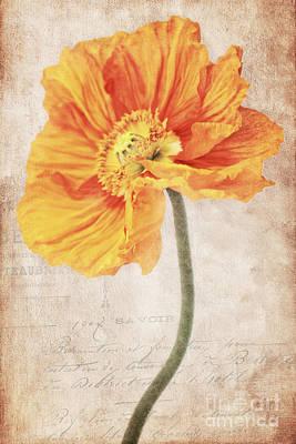 Bella Orange Print by Angela Doelling AD DESIGN Photo and PhotoArt