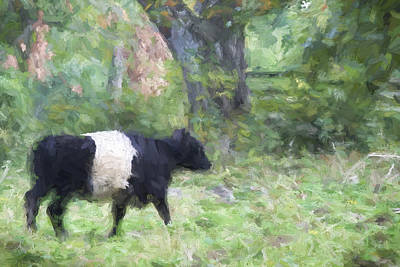 Belted Galloway Cow Painterly Effect Print by Carol Leigh