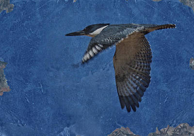 Kingfisher Digital Art - Belted Kingfisher 3 by Ernie Echols