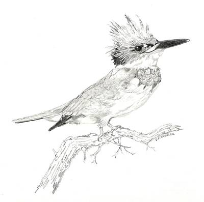 Kingfisher Drawing - Belted Kingfisher by Donald Koehler