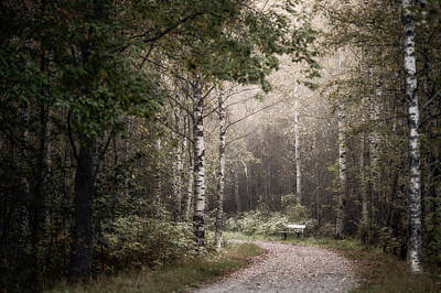 Forest Photograph - Bench In September by Ari Salmela