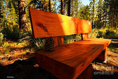 Bench In The Woods Print by Cheryl Young