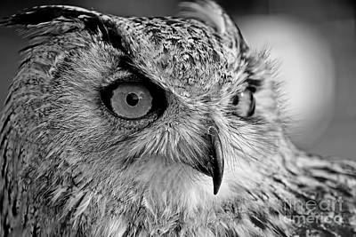 Bengal Owl Black And White Original by Chris Thaxter