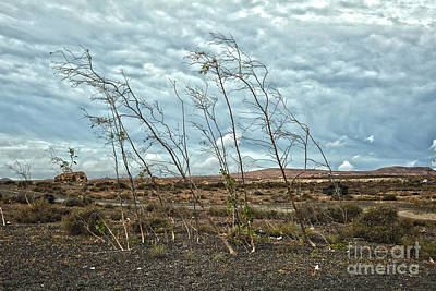 Cloudscape Digital Art - Bent Plants In The Wind by Patricia Hofmeester