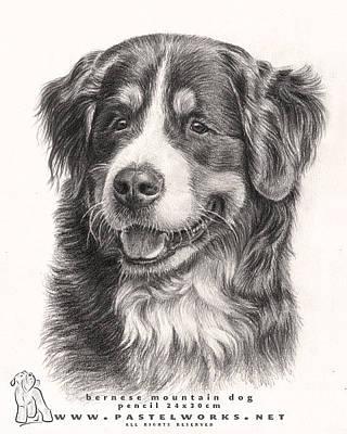 Dogs Drawing - Bernese Mountain Dog by Tobiasz Stefaniak