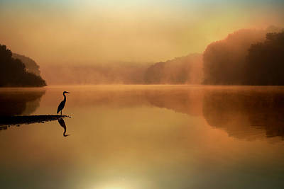 Heron Photograph - Beside Still Waters by Rob Blair