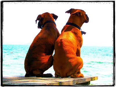 Best Friends Dog Photograph Fine Art Print Print by Laura  Carter