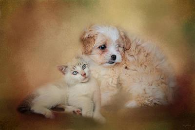 Kitten Photograph - Best Friends by Jai Johnson