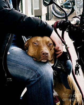 Candid Photograph - Best Pal by Ivy Ho