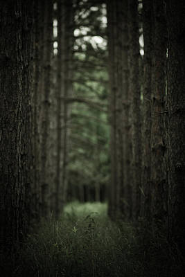 Virginia Photograph - Between The Trees by Shane Holsclaw