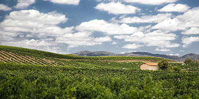 Big Wine Photograph - Between The Vines by Peter Tellone