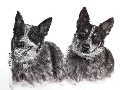 Cattle Dog Drawing - Beverly Feeds The Blues by Michelle Wolff