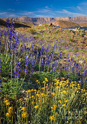 Canyon Photograph - Big Bend Flowers by Inge Johnsson