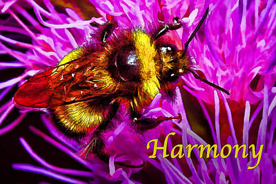 Big Busy Bumble - Harmony Print by Bill Caldwell -        ABeautifulSky Photography