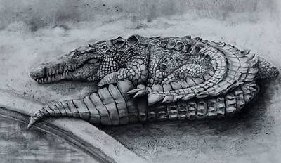 Alligator Drawing - Big Daddy A Drawing by Jean Cormier
