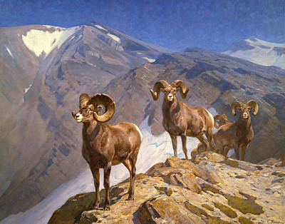 Big Horn Sheep Painting - Big Horn Sheep On Wilcox Pass by Mountain Dreams