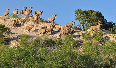 Megalith Photograph - Big Horn Sheep Running Free At The Garden by John Hoffman