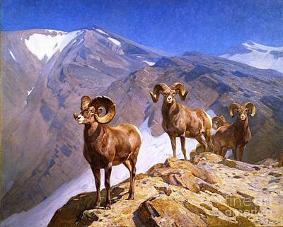 Big Horn Sheep Painting - Big Horn Sheep - Wilcox Pass by Pg Reproductions
