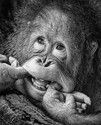 Monkey Photograph - Big Smile.....please by Angela Muliani Hartojo