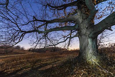 Winter Trees Photograph - Big Wood by Kristopher Schoenleber