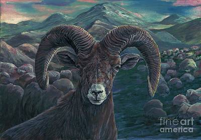 Mountain Goat Painting - Bighorn Sheep by Tom Blodgett Jr