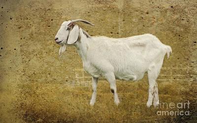 Goat Digital Art - Billy Goat Gruff by Betty LaRue