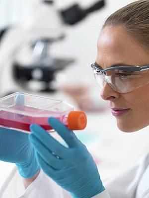 Biologist With Stem Cells Print by Tek Image