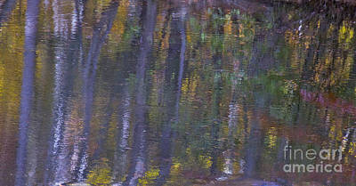 Birch Reflections Print by Cindy Lee Longhini