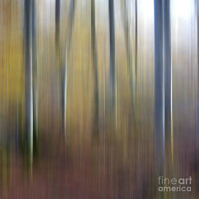 Birch Trees. Abstract. Blurred Print by Bernard Jaubert