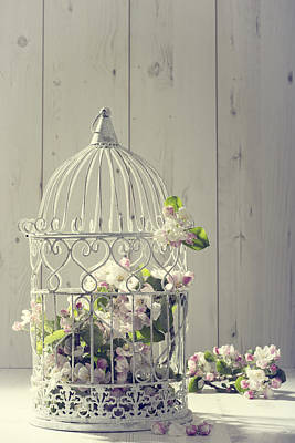 Bird Cages Photograph - Bird Cage by Amanda Elwell